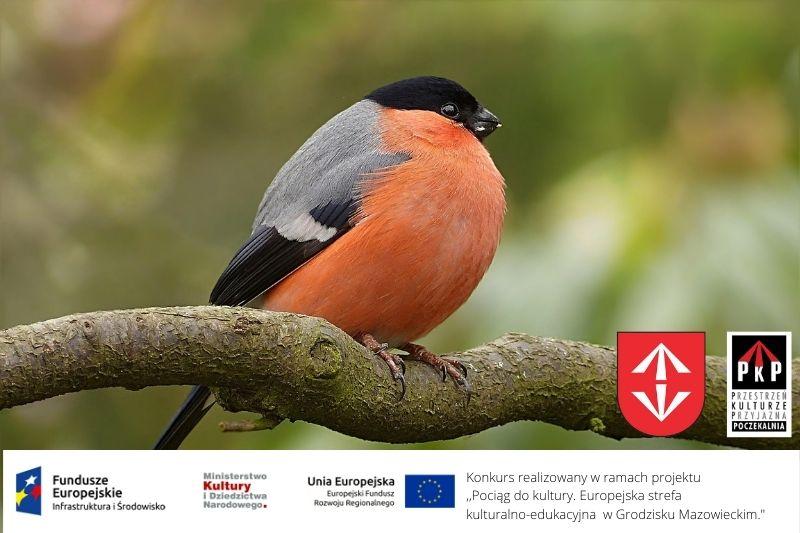 """Konkurs ekologiczno-przyrodniczy ,,Ptaki z mojej okolicy"""""""